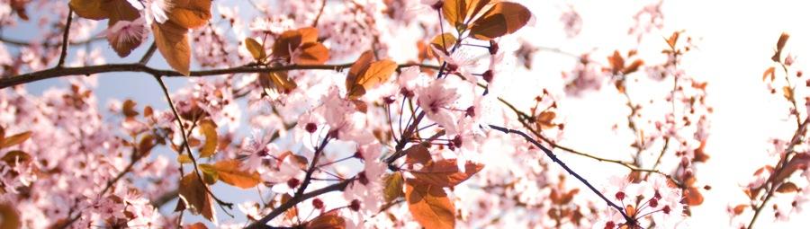 rosa Blütenzauber an Pfingsten